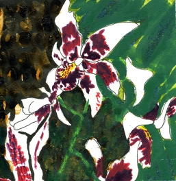 Weekly Sketch – Orchids – 20/01/2013